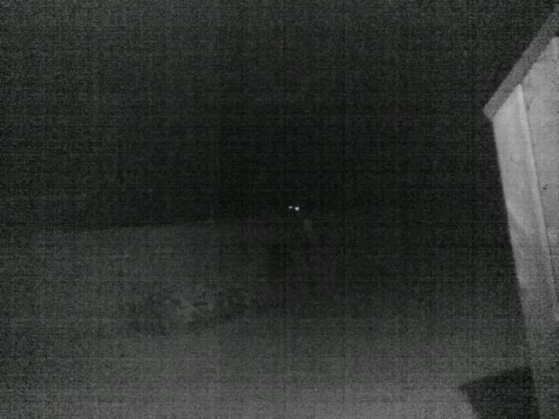Yard at night with IR on